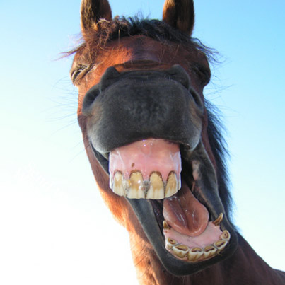 silly-funny-horse-pictures