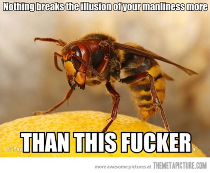funny-wasp-scary-big