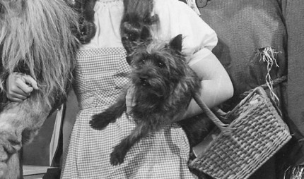 07-Toto-The-Wizard-of-Oz-famous-pets-from-TV-and-movies-1